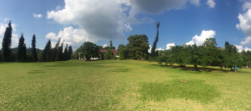 A great wide lawn, marking the center of the Royal botanical garden, Kandy.