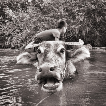 Kid cleaning buffaloes in the river.